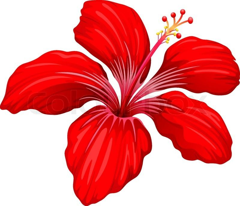 Illustration Of A Red Hibiscus Plant On A White Background Stock Vector Colourbox On Colourbox Flower Png Images Flower Painting Lilies Drawing