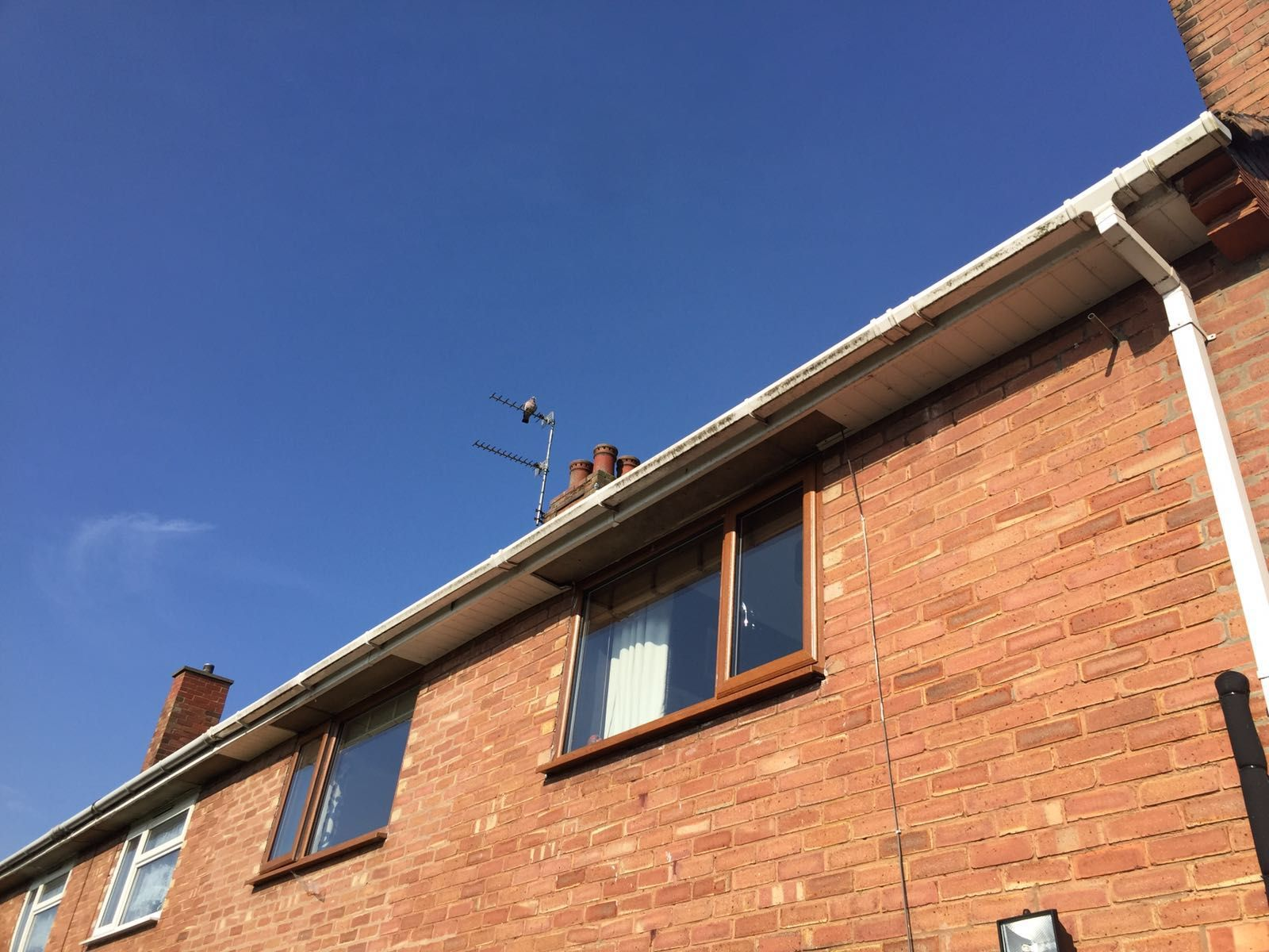 white fascia and soffit and guttering,golden oak