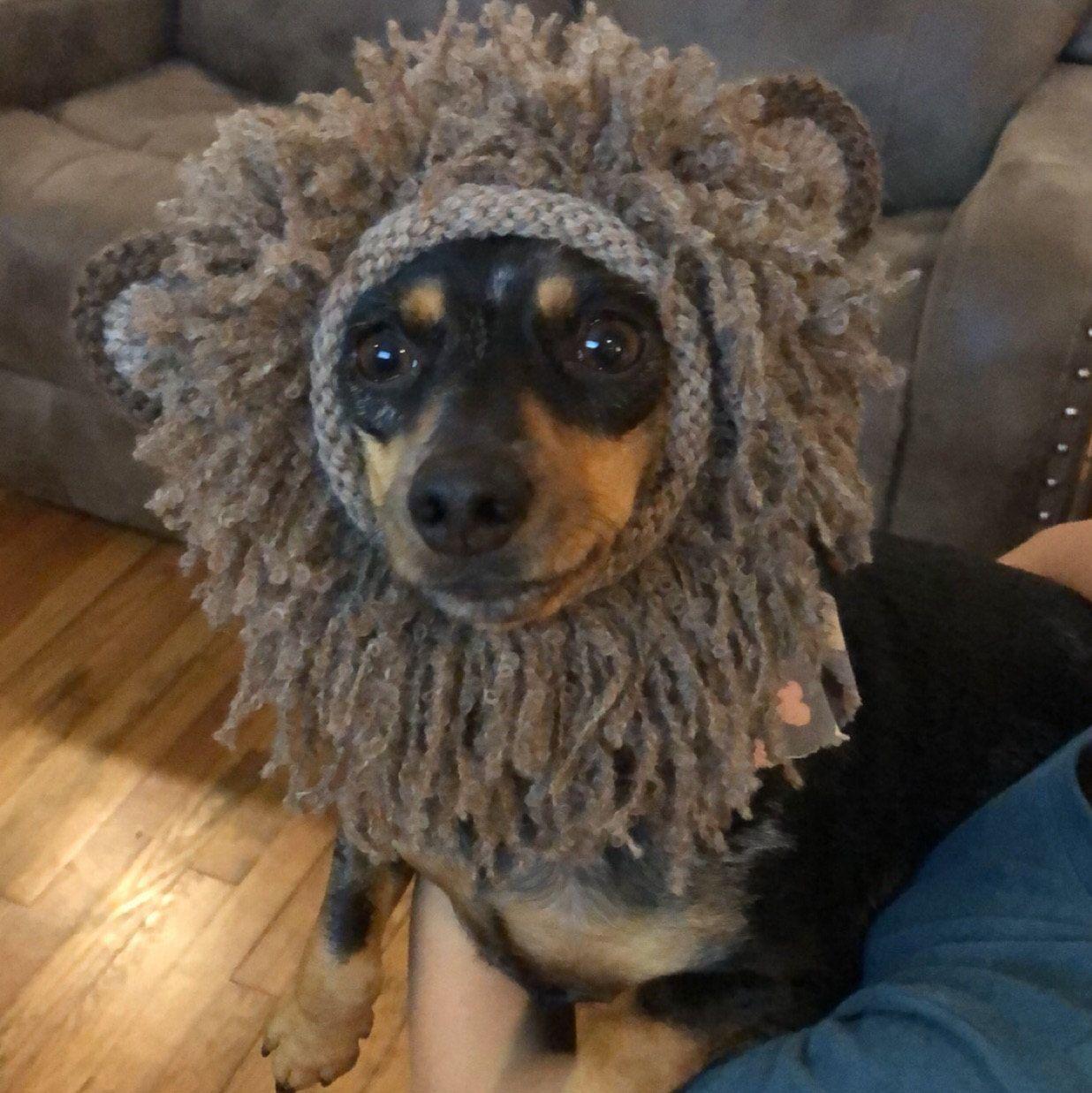 Knitting Pattern Teddy Bear Dog Hat Small Dog Bear Hat Bear Etsy Bear Dog Teddy Bear Dog Dog Hat