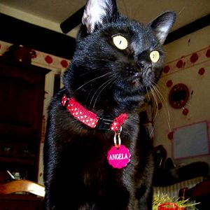 collier pour chat alter ego