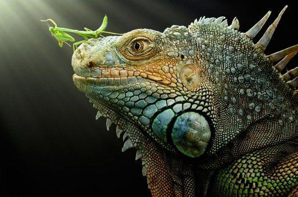 Чумовые фотографии дикой природы (52 фото)   World ...