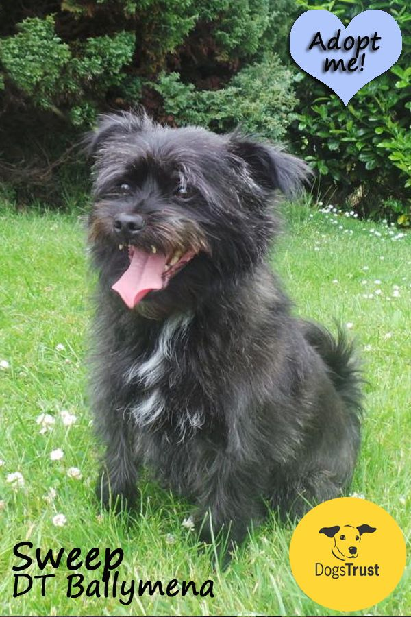 Pin On Dogs Trust Dogs Needing Homes