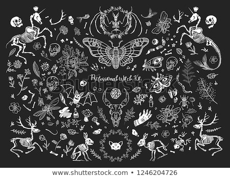 Professional Witch Kit A Huge Set Of Items Magic Elements Mystical Creatures Healing Herbs Skulls And Bo Weird Images Witch Aesthetic Aesthetic Wallpapers