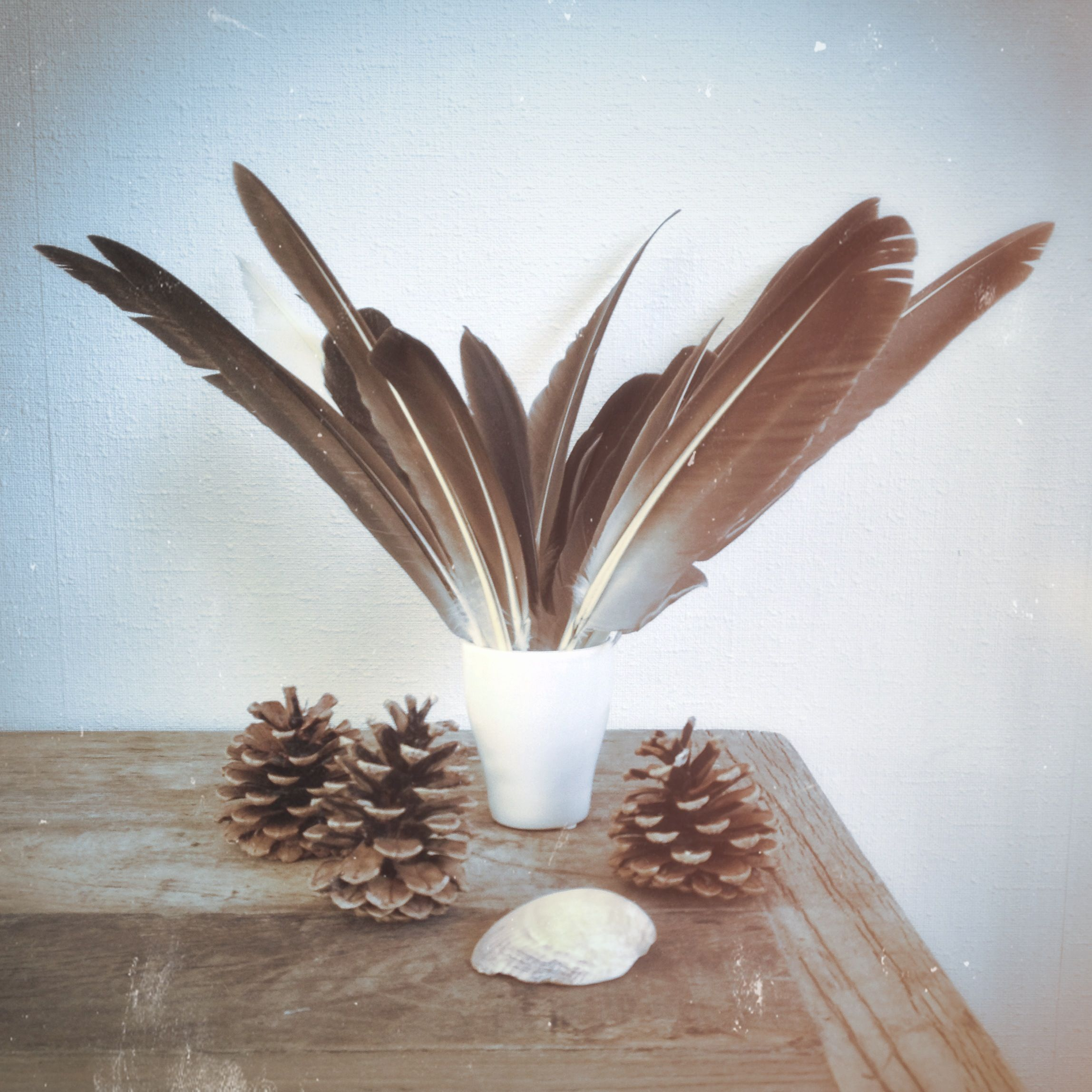 Stills, feathers, pine cones and shell | photo alicebrandt