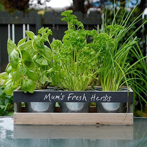 Personalised Indoor Herb Garden Kit Window Plant Box Pot Kitchen