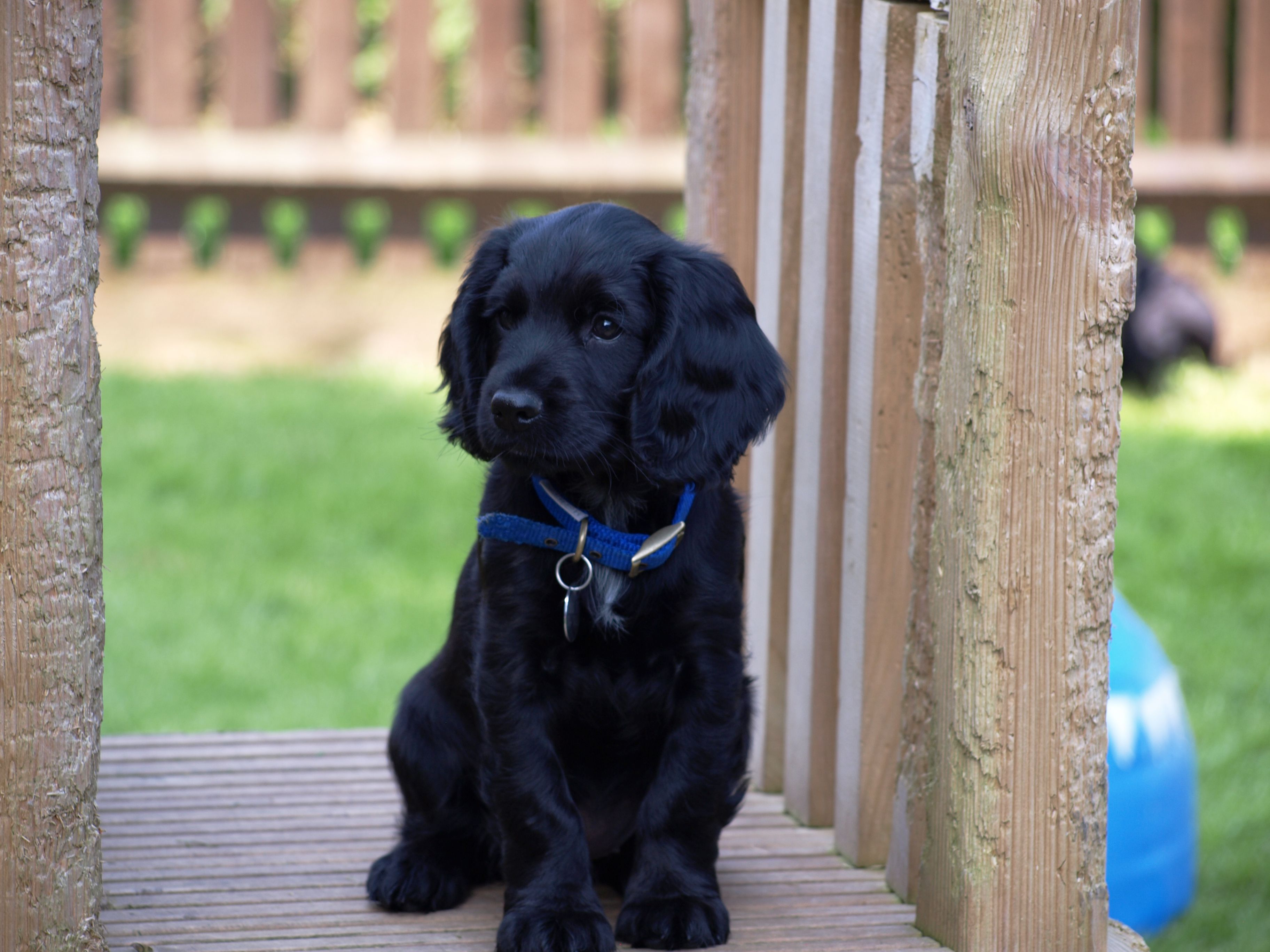 Are you the only organisation that trains hearing dogs? We