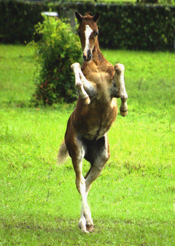 River Dance #equine #horse #horselover http://globalhorsecents.com