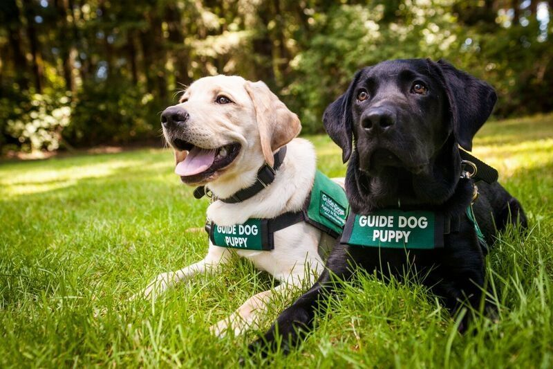 It S International Guide Dog Day Today We Celebrate These