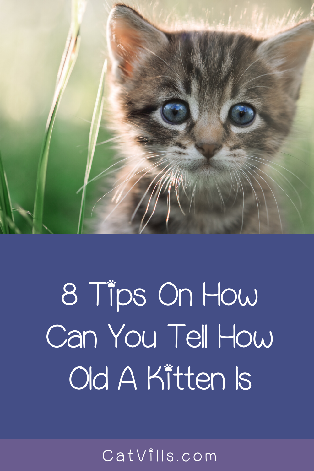 How Can You Tell How Old A Kitten Is Follow These 8 Tips Catvills In 2020 Sick Kitten Kittens Cutest Funny Cat Memes