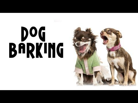 """Try Not To Laugh """"Dog barking videos compilation 2018"""
