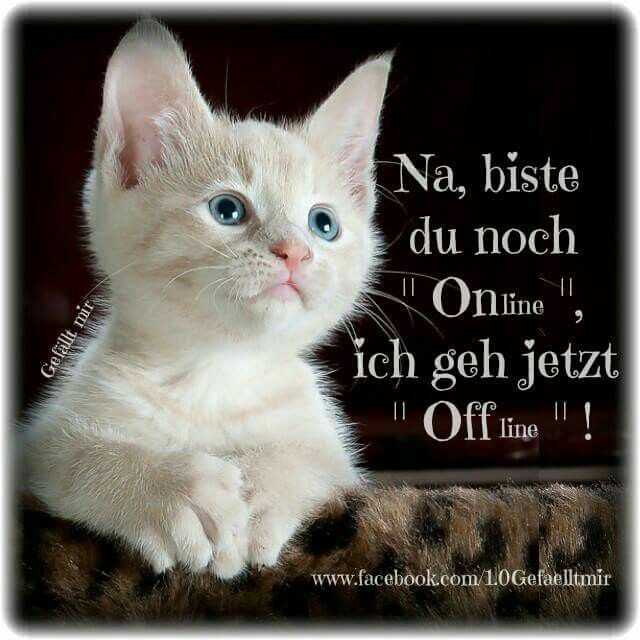 Cats Guten Abend Gif