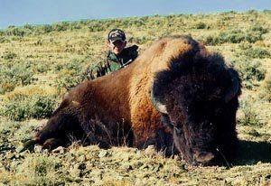 Buffalo hunting - OUTDOORSMAN.com