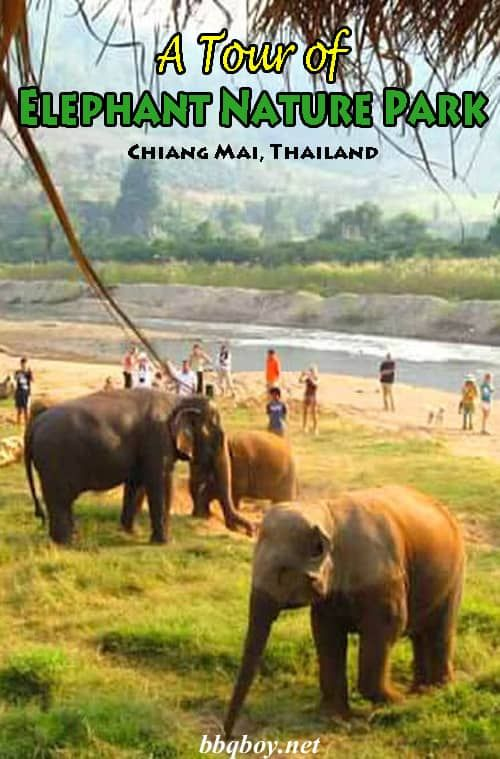 Elephant Nature Park outside Chiang Mai is a popular place to visit elephants (they also have water buffalo, goats and lots of dogs). This post describes a tour of Elephant Nature Park. #bbqboy #ChiangMai #ENP #ElephantNaturePark #Thailand #travel