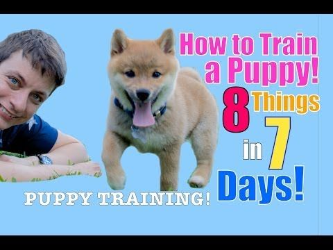 How To Train Your Puppy 8 Things In 7 Days Stop Puppy Biting