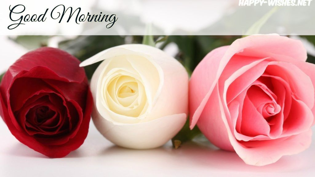 Red White And Pink Rose In Good Morning Images Blouse Blouses