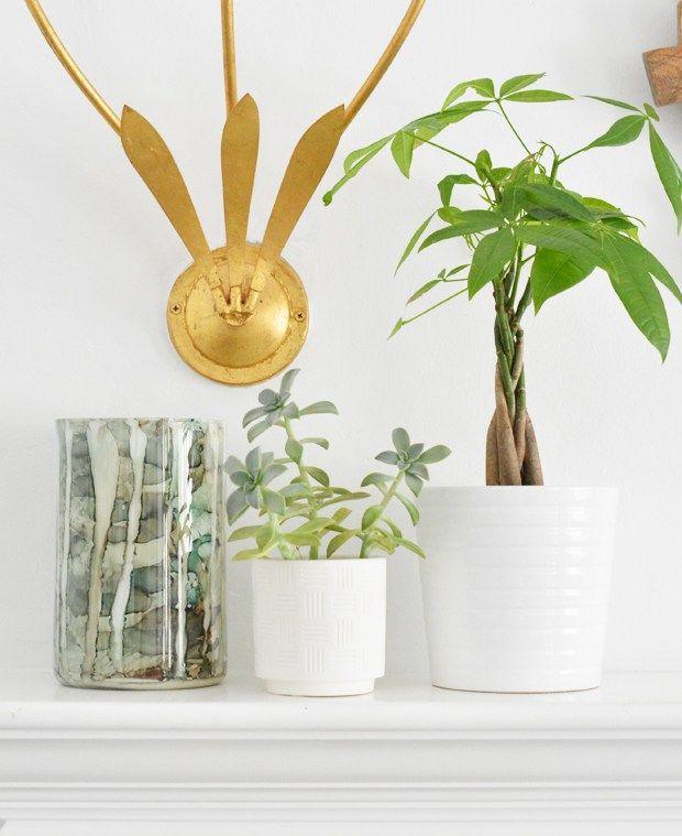 Hip House Plants   House plants, Plants, Garden types