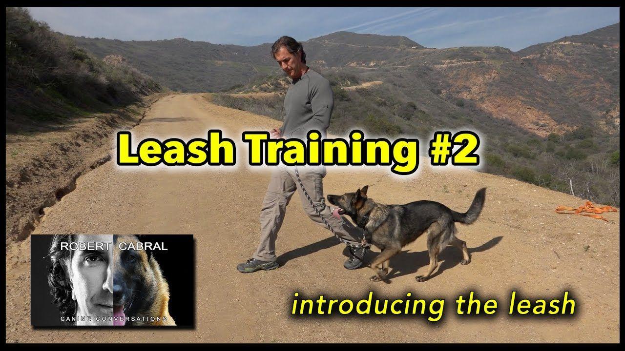 Leash Training 2 Introducing The Leash Dog Training Video