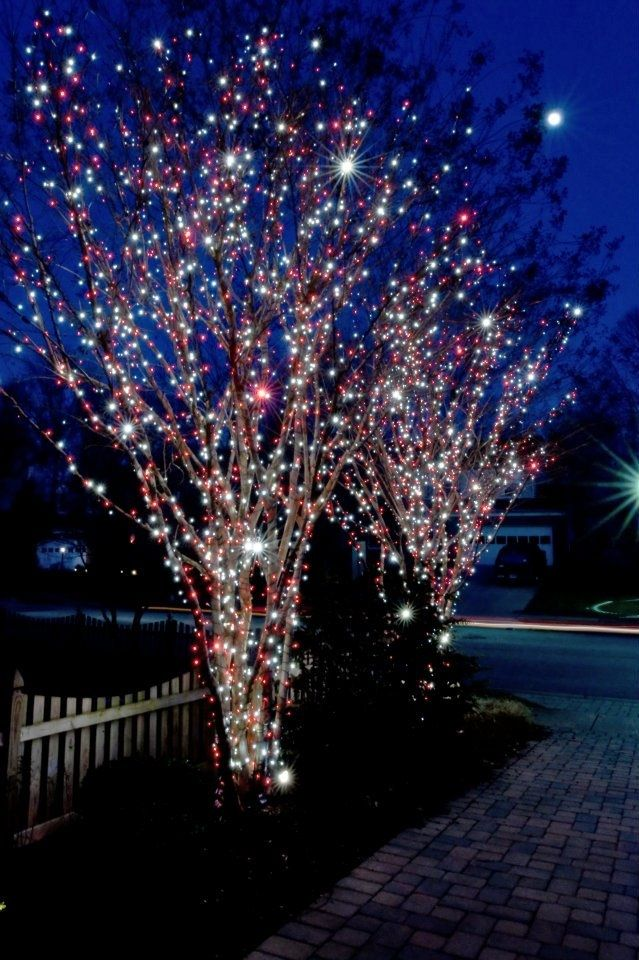 I love lots of lights on trees!
