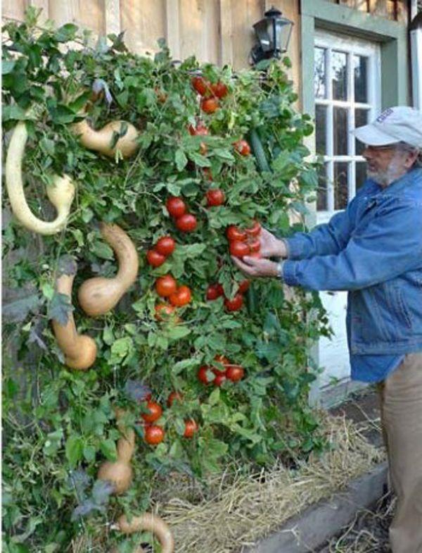 Organic Vegetable Plants, Garden Ready Vegetable Plants   The Tasteful  Garden