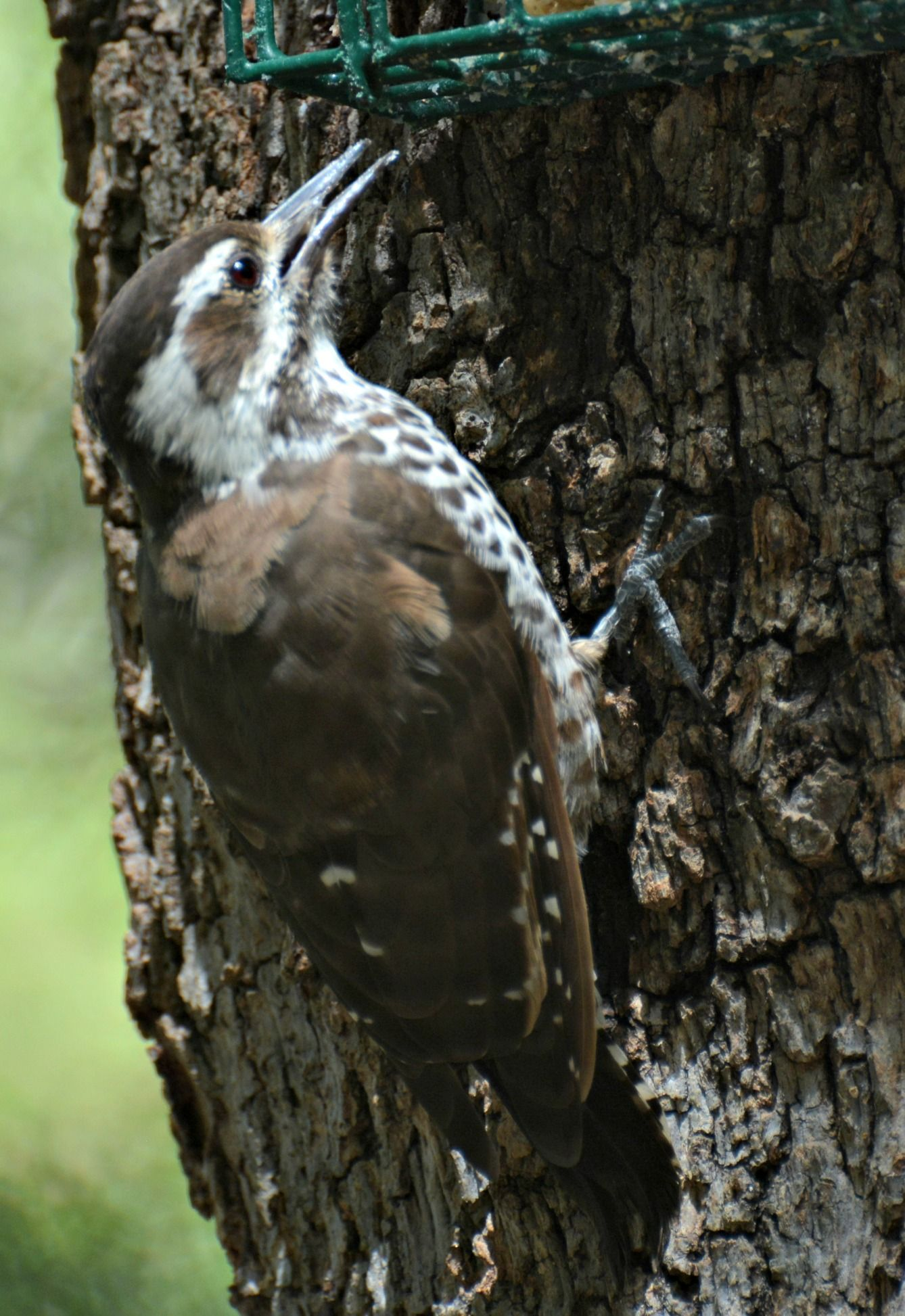 How to Attract 7 Different Types of Woodpeckers to Your ...