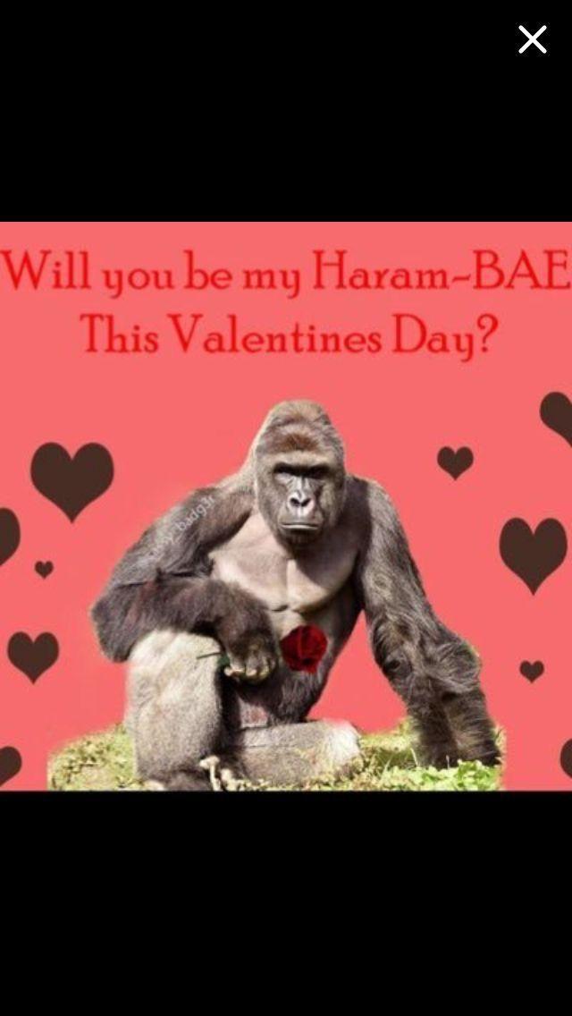 pinkaren patterson on valentine's day  funny