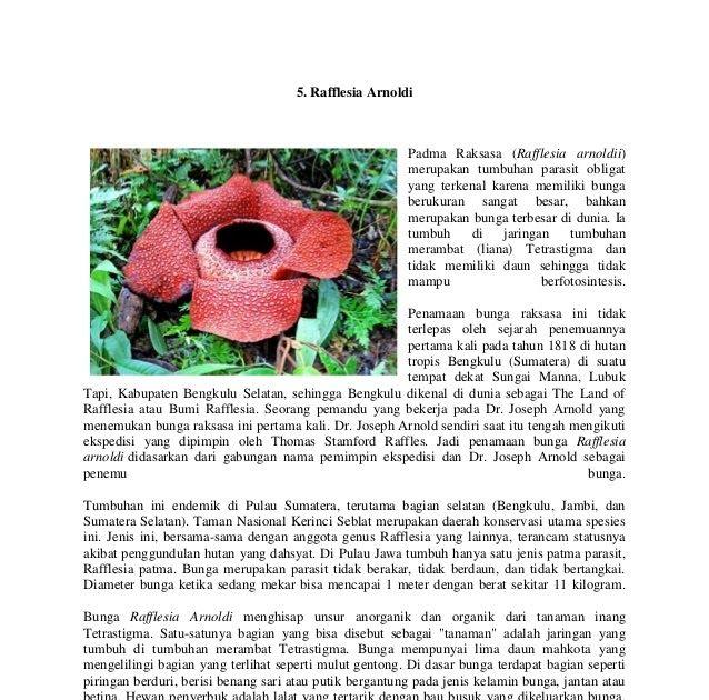 Terbaru 10 Gambar Bunga Raflesia Beserta Keterangan Jenis Bunga Ini Termasuk Salah Satu Jenis Bunga Langka Yang Hanya Ada Di Indonesia Dan Di 2020 Bunga Gambar Flora