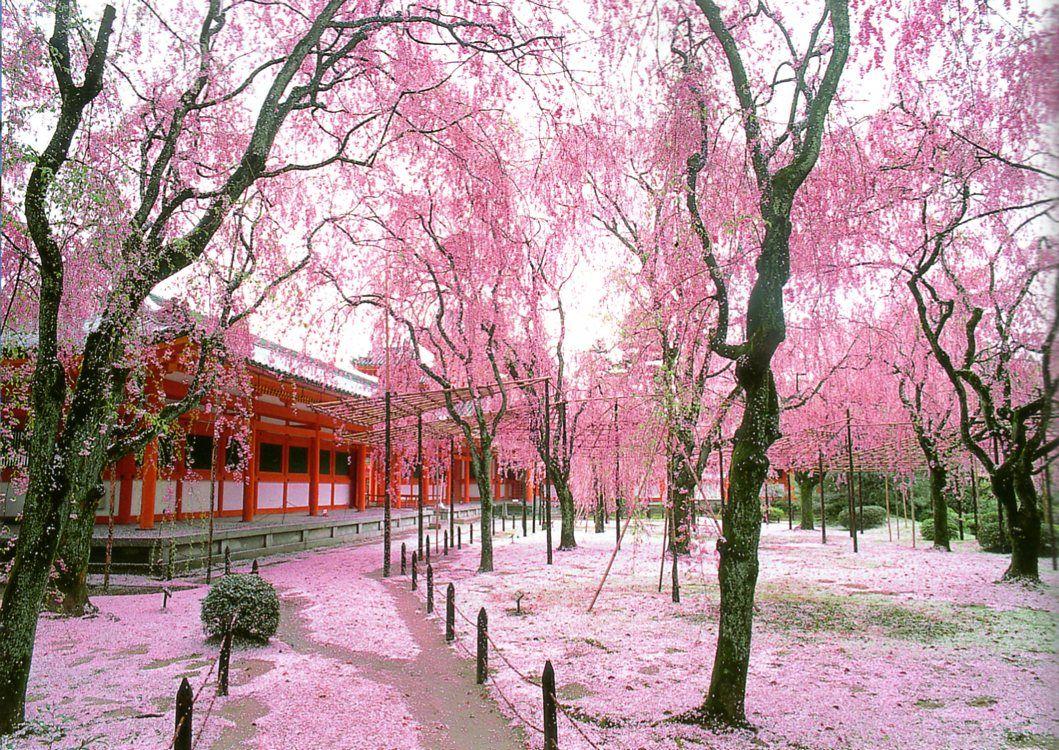Jardins Japonais Les Fleurs Hey Pinterest Japan Japanese Et