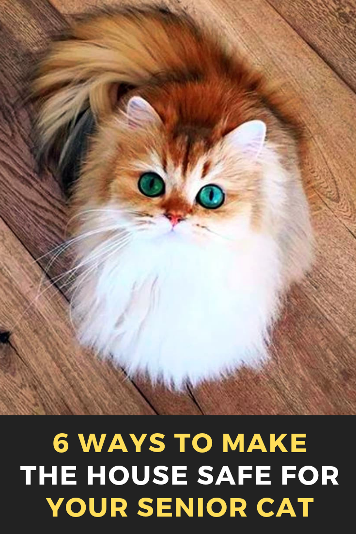 6 Ways To Make The House Safe For Your Senior Cat Cats Cat Catsofinstagram Of Catstagram Beautifulcats Pets Catlover Senior Cat Cats Senior Cat Care