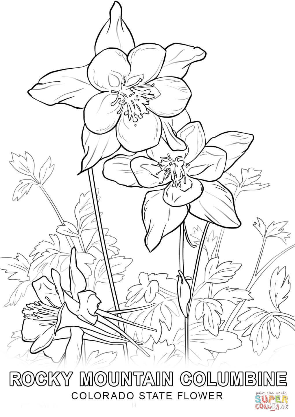 Colorado State Flower coloring page | Free Printable Coloring Pages ...