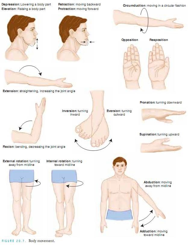 25. Musculoskeletal System Disorders | yoga anatomy | Pinterest ...