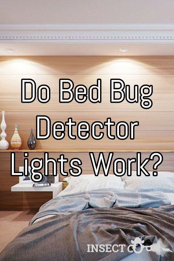 Do Bed Bug Detector Lights Work? Bed bugs, Bed bugs