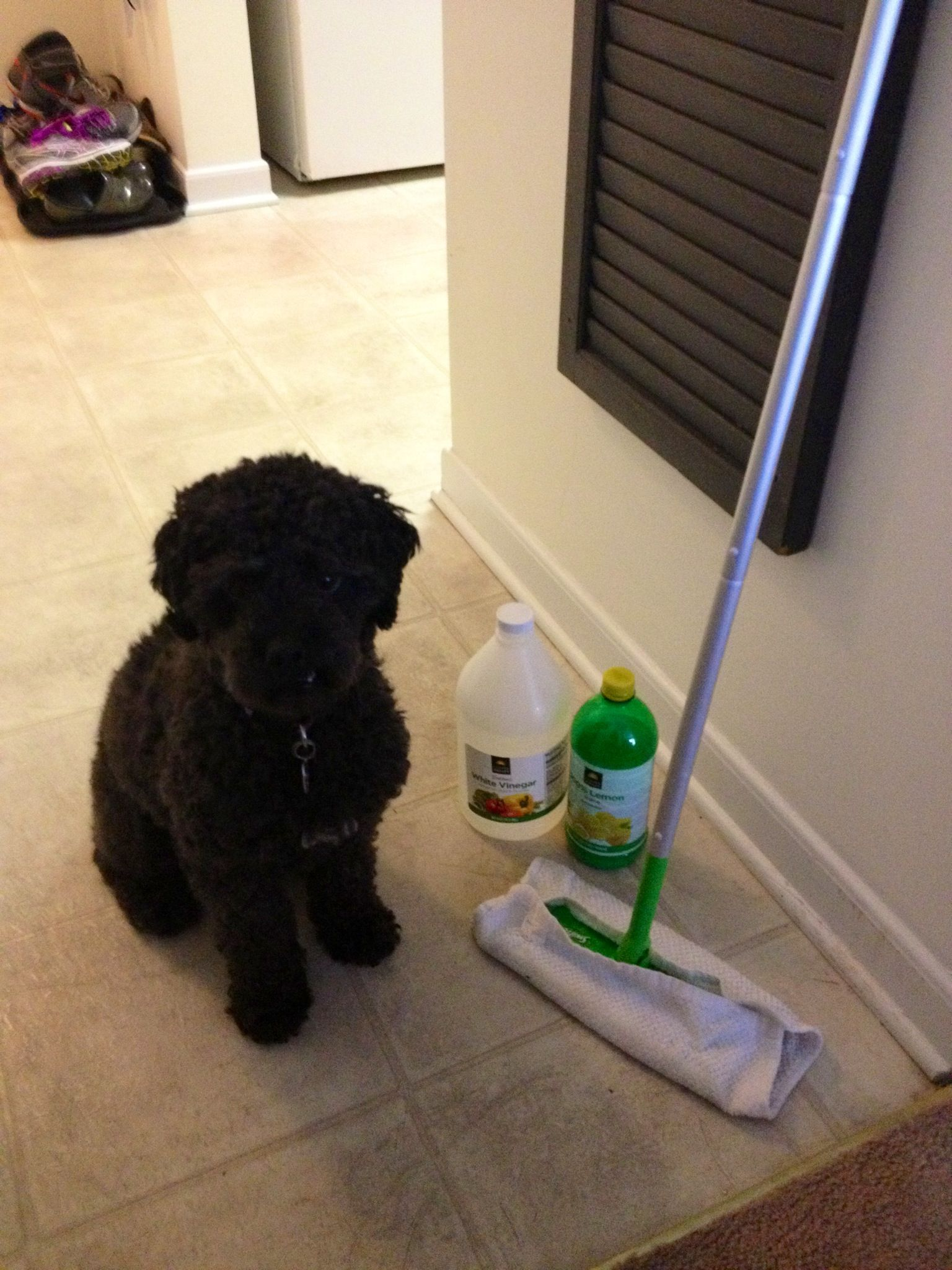 Pet Friendly Non Toxic Floor Cleaner 1 2 White Vinegar Cup Lemon Juice And Sink Full Hot Water I Use The Swifter Mop But With Old Hand Towels So