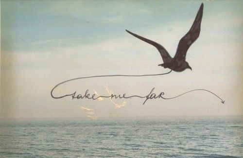 bird, ocean, photography, quote, sea, sky