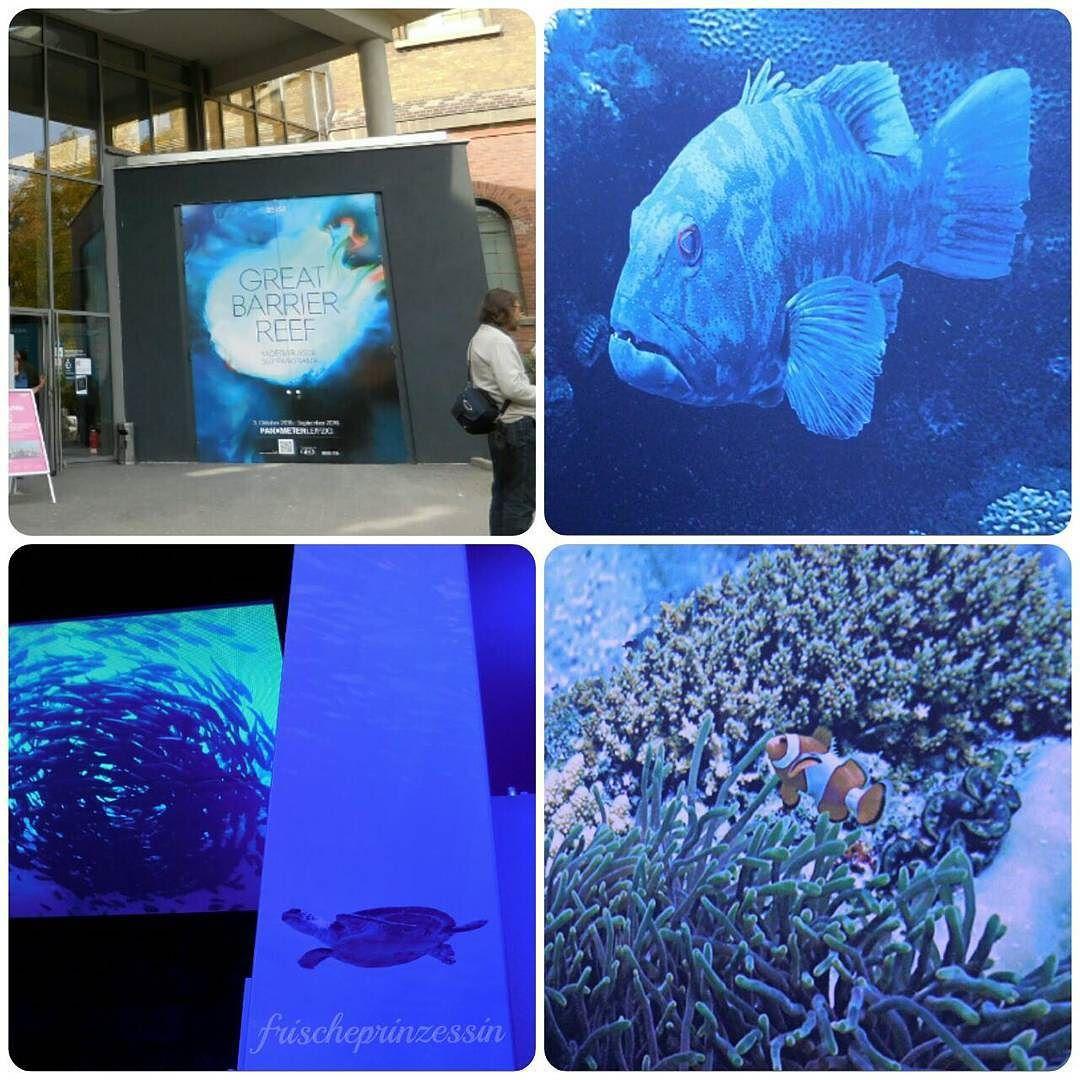 #greatbarrierreef #panometer #panometerleipzig #leipzigpanometer #leipzig #korallen #fisch #fische #clownfish #clownfisch #anemone #wasserschildkröte #fischschwarm #waterturtle #marineturtle #coral #coralreef #turtle #seaturtle #reef by frischeprinzessin http://ift.tt/1UokkV2