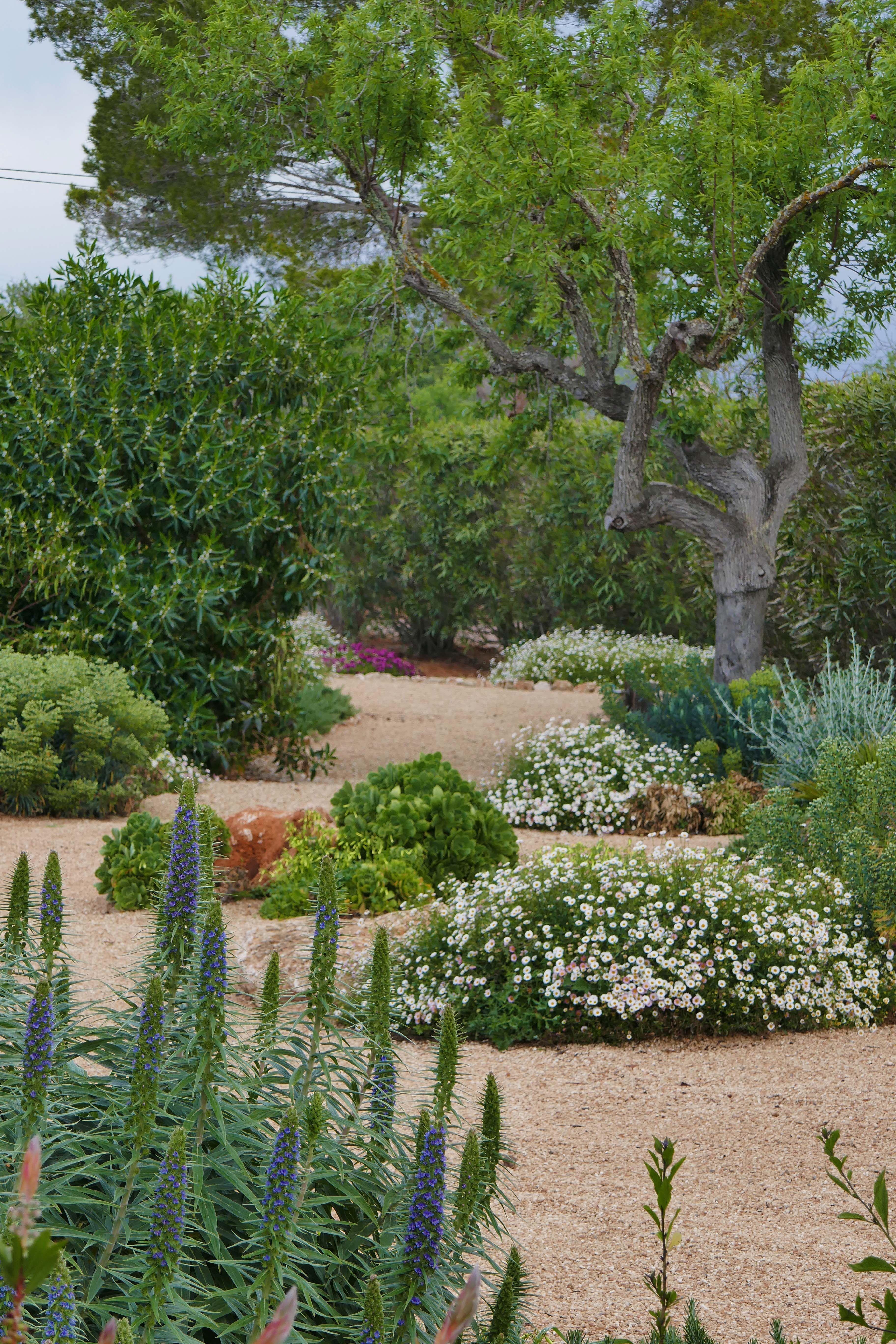 Mediterranean Dry Garden Planting Mediterranean Garden Mediterranean Plants Mediterranean Landscaping