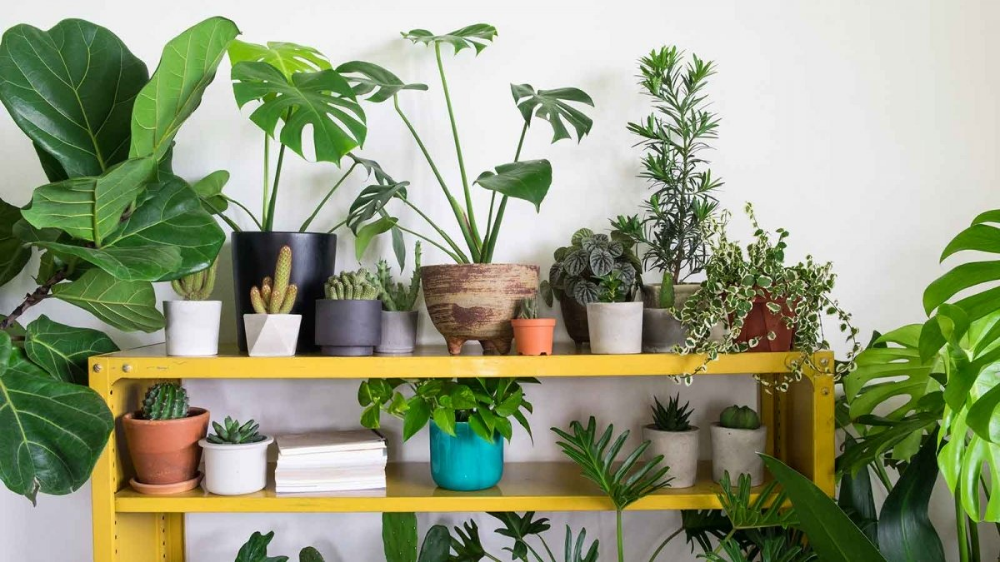 How To Keep Houseplants Watered While You Re Away Plants Growing Plants Indoors Buy Plants