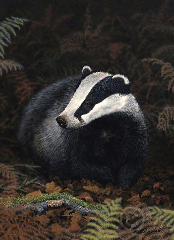 Badger Greeting Cards Wildlife Artist Nigel
