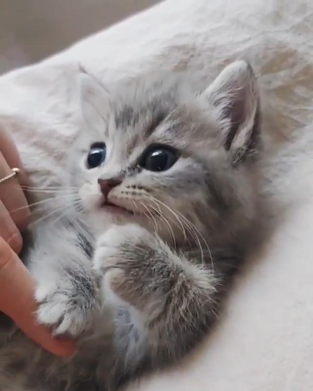 Awwwww kitty