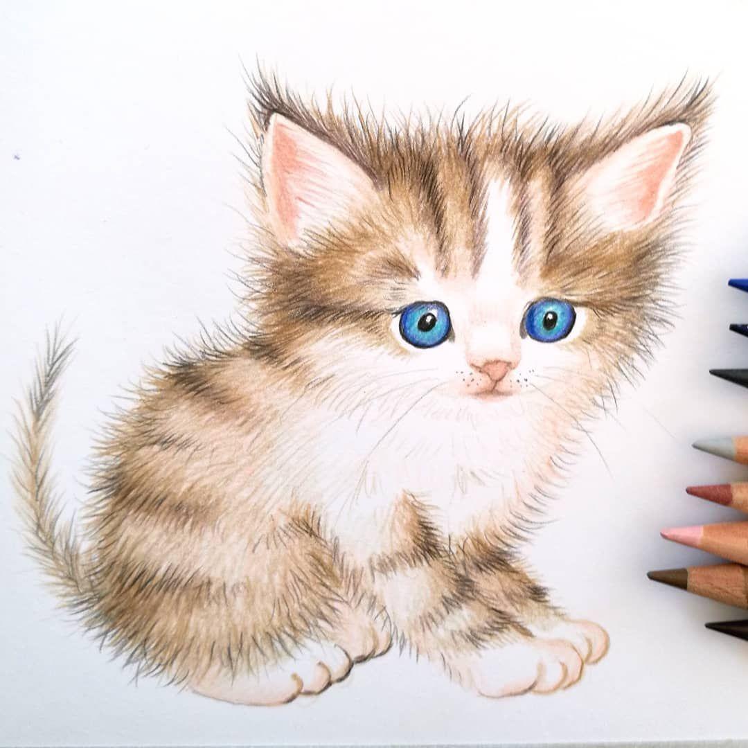 Pin Auf Katze Zeichnen Lernen Katzen Malen
