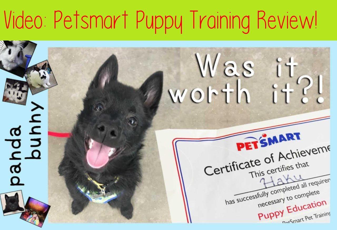 Petsmart Puppy Training Review Pandabunnyhaku Graduated From