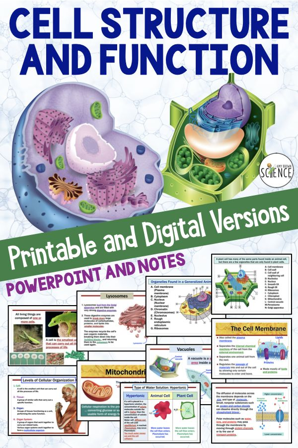 Cell Organelles Powerpoint and Notes Printable and
