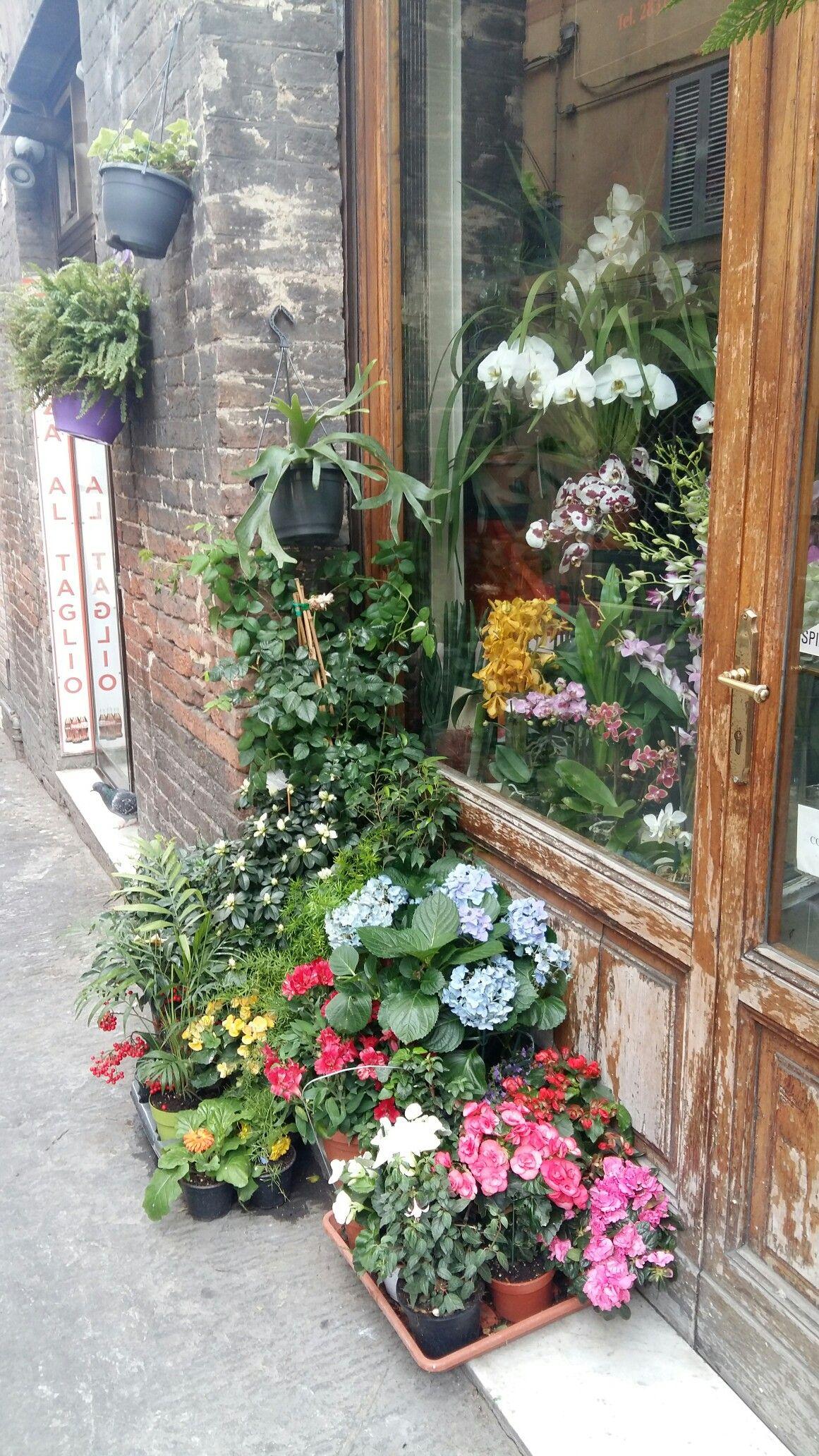 Negozio fiori Toscana Fiori, Piante, Toscana