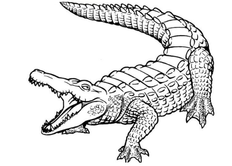 bild-malvorlage-krokodil-5.jpg (754×539) | Coloring pages ~ kids ...