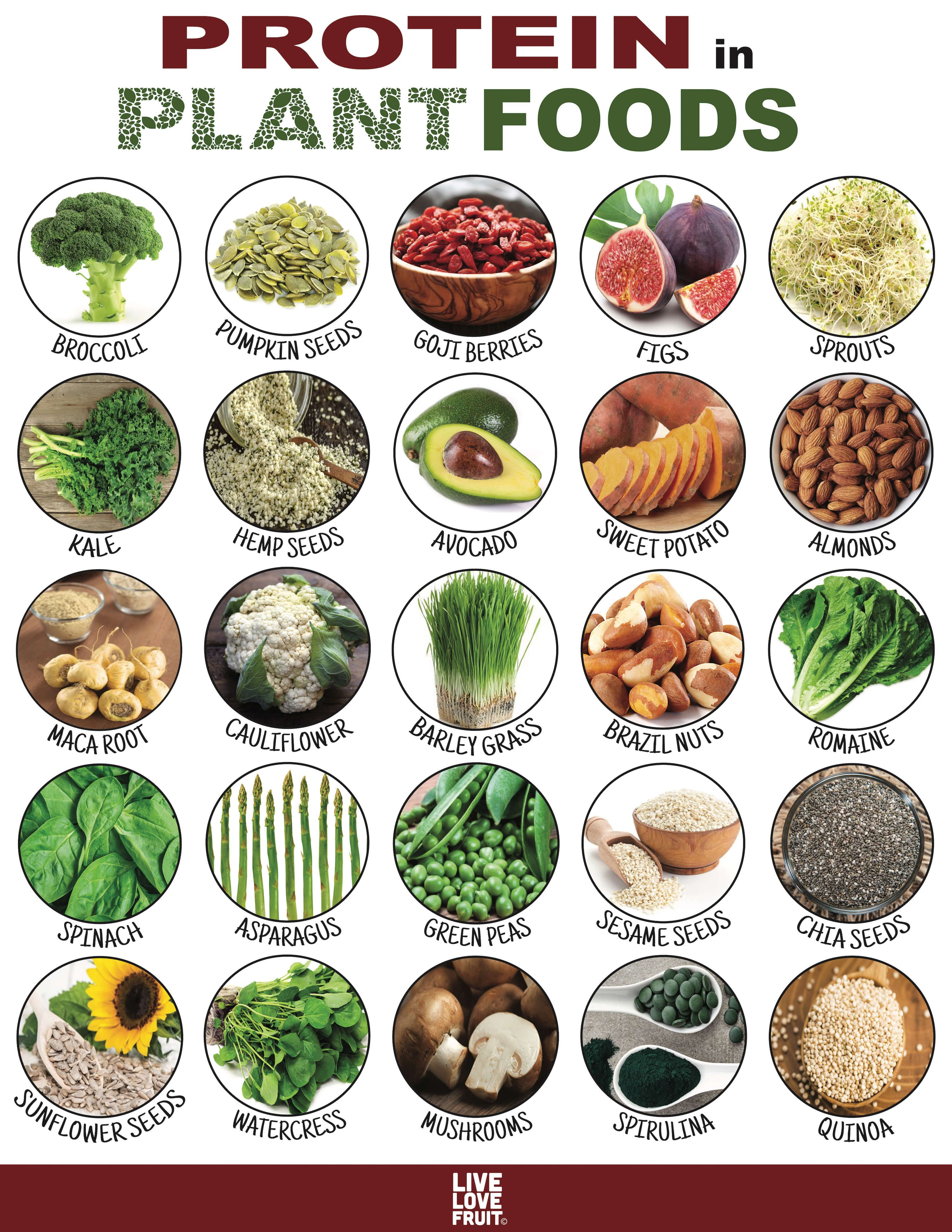 24 Protein Packed Plant Foods That Can Substitute For Meat Plant Food Diet And Nutrition Healthy