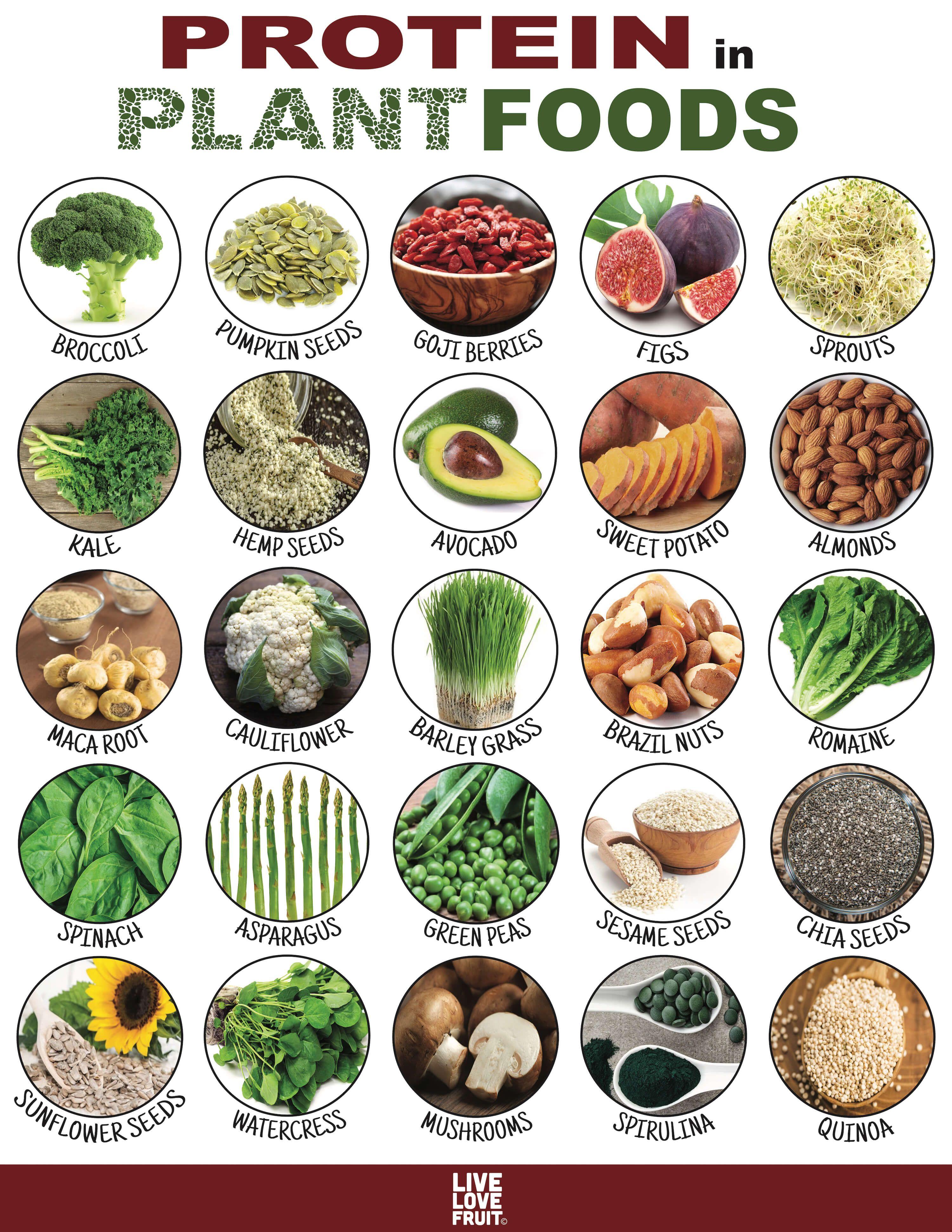 protein substitutes for the vegan diet