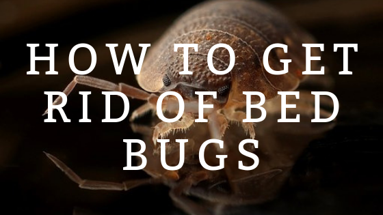 How to Treat/Kill Bed Bugs with Effective DIY Home