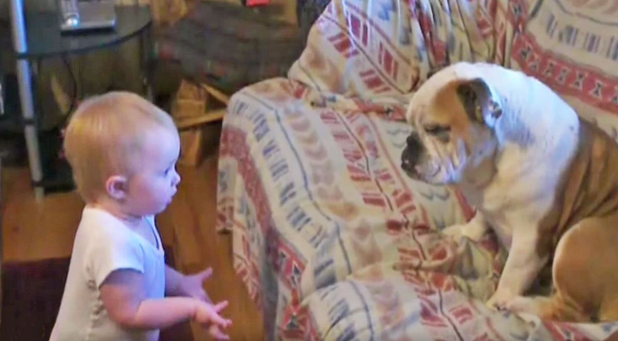 Baby Has A Bone To Pick With Bulldog Puppies Kitties Cute