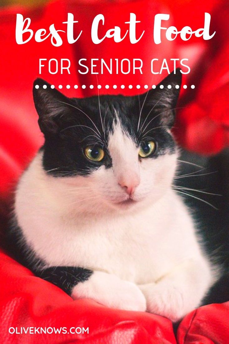 Best cat food for senior cats wet and dry food