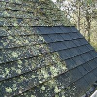 How To Remove Roof Moss Cleaning Hacks House Cleaning Tips Cleaning Painted Walls