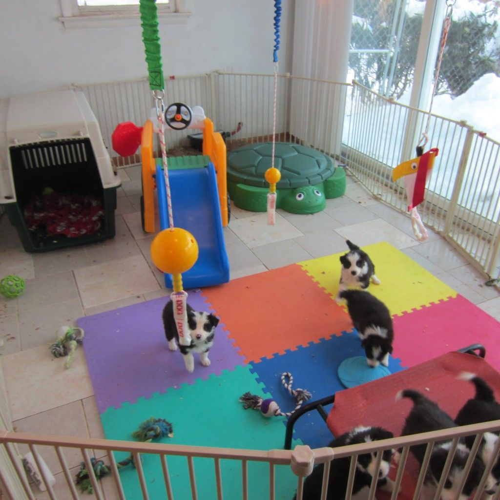 Puppy Playpen Puppy Room Dog Play Room Dog Playground